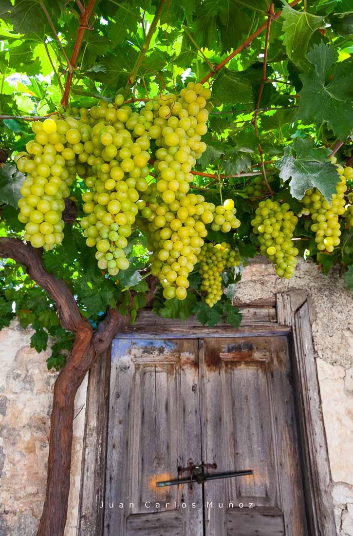 vinos griegos, vinedos empona rodas