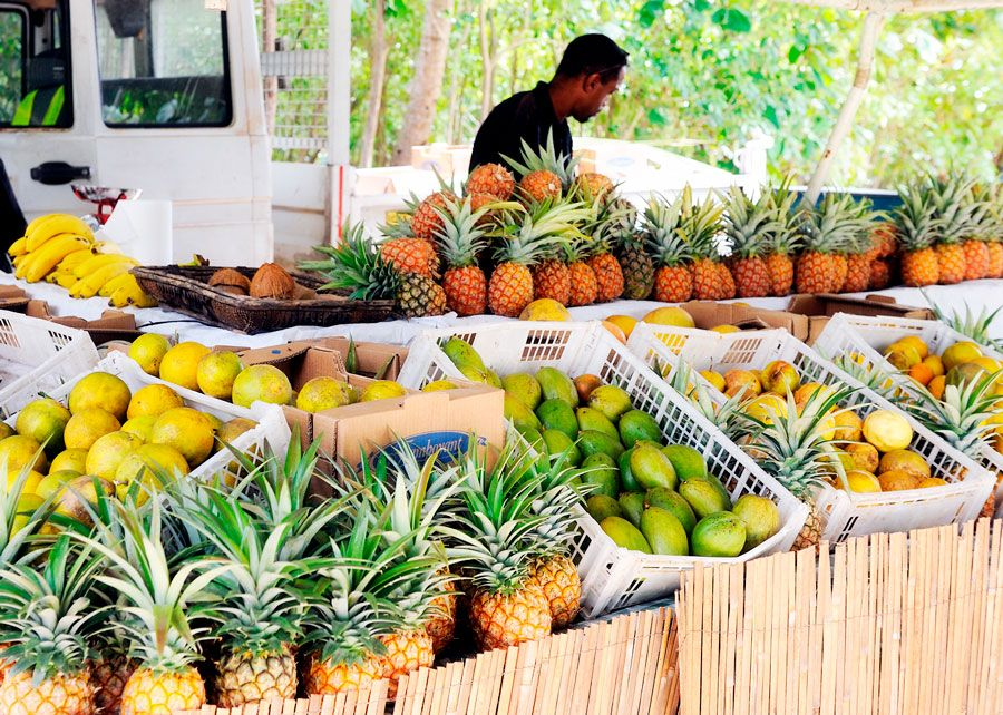 viajes al Caribe martinica