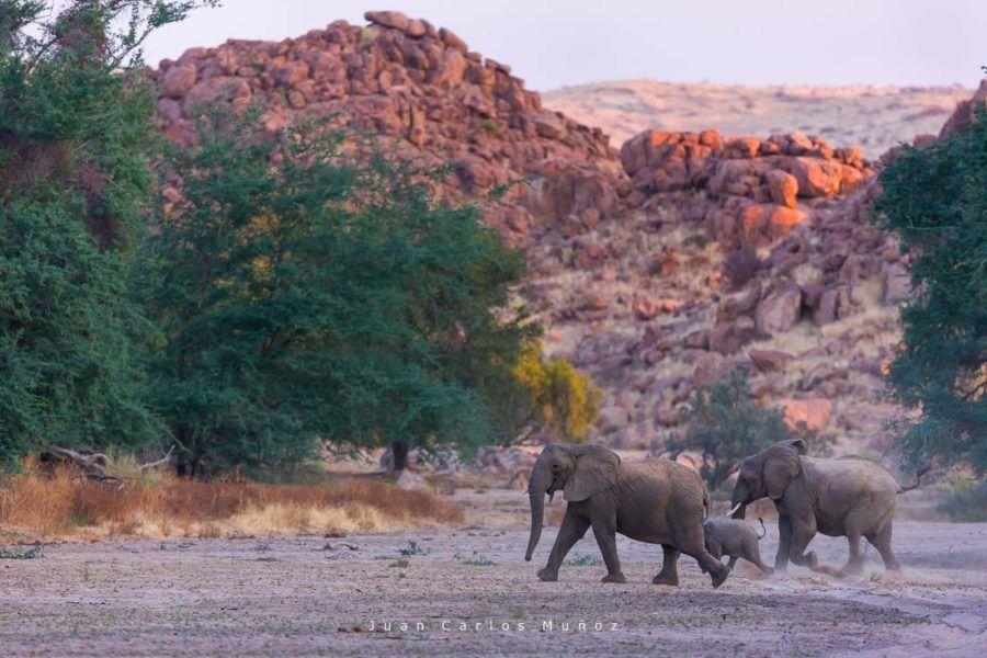 elefantes namibia