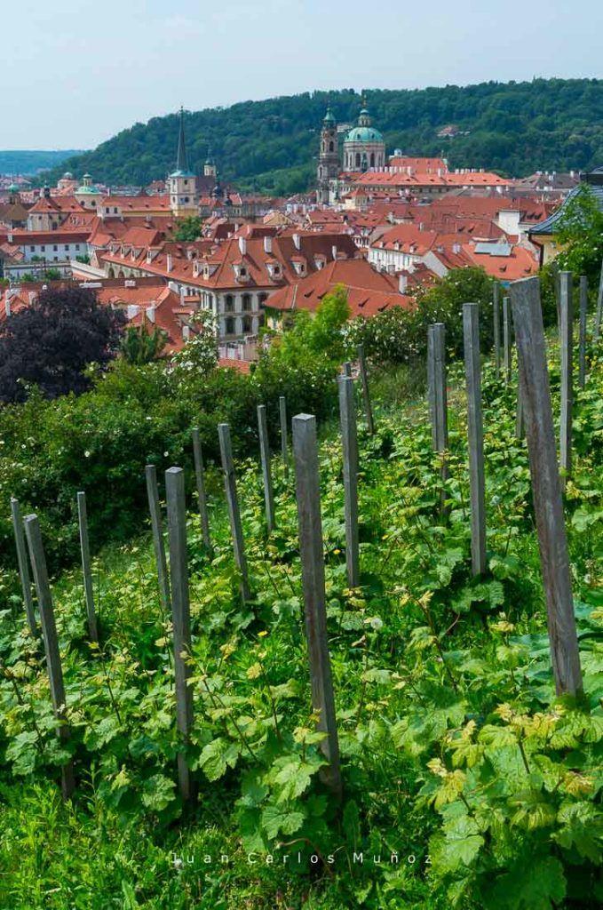 vinos praga vendimia