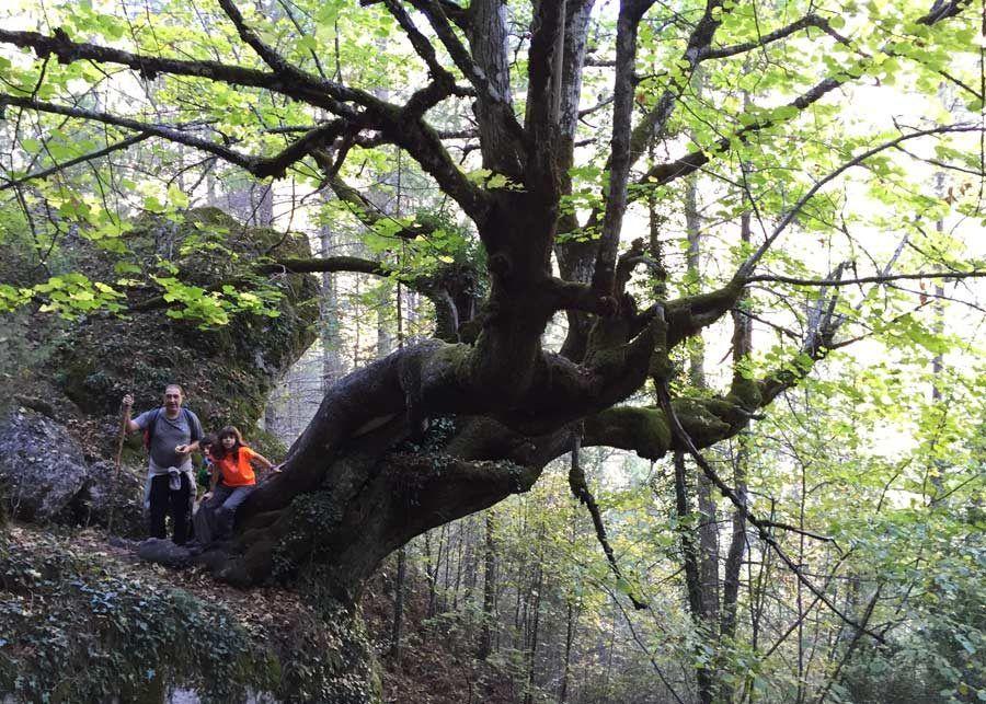 sendero botanico, hoz beteta, ruta natural cuenca
