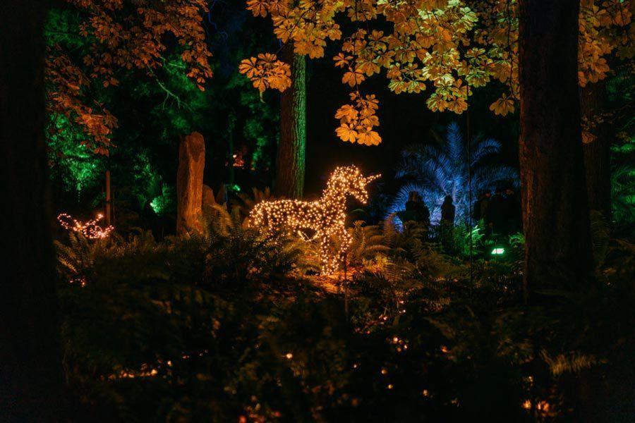 jardin botanico, navidad en madrid