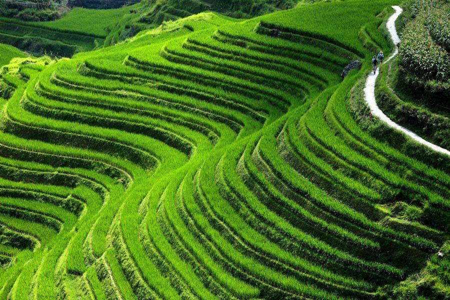 columna de dragon, senderismo arrozales de guangxi
