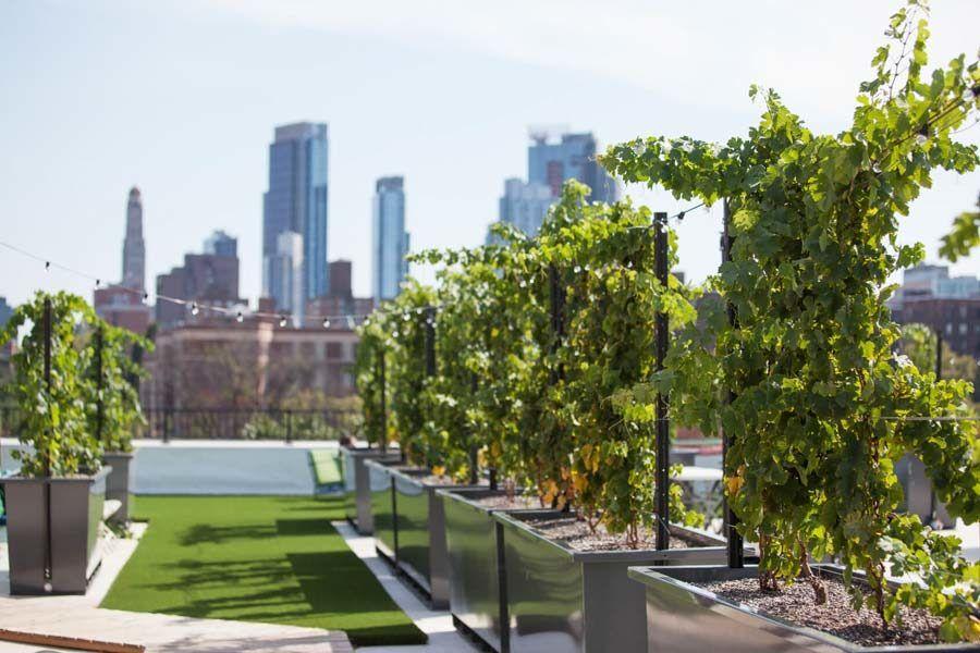 huertos urbanos nueva york