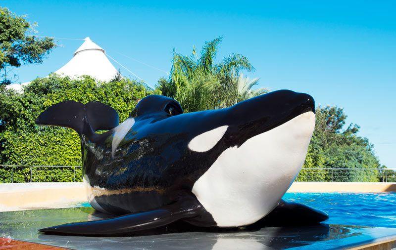 orcas loro parque, viaje familia tenerife