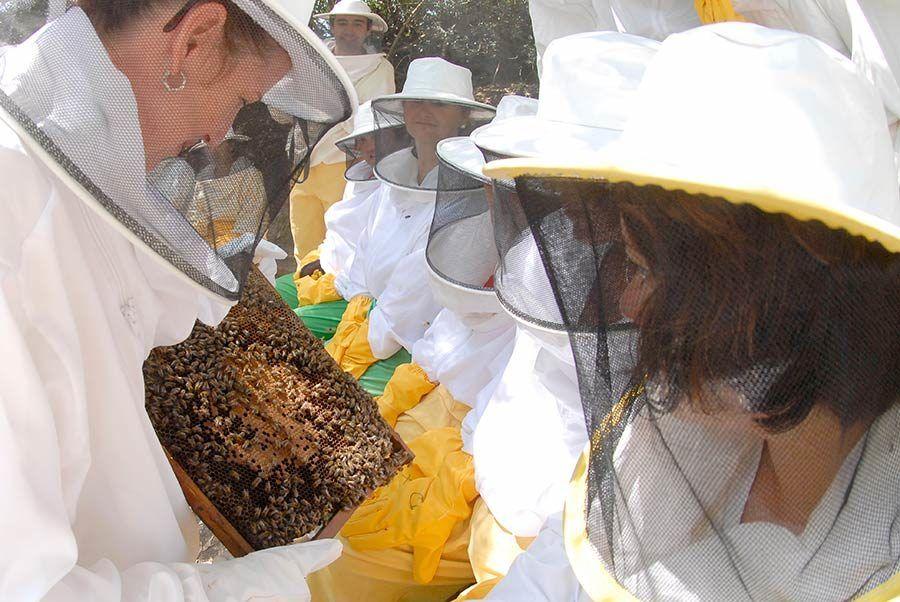 museo miel, visita colmenas, jerez, visitas familiares