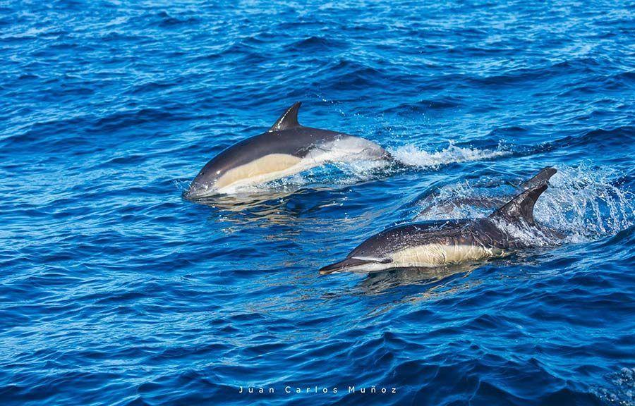 avistamiento de cetaceos, viajes al Pais Vasco, viajes de naturaleza