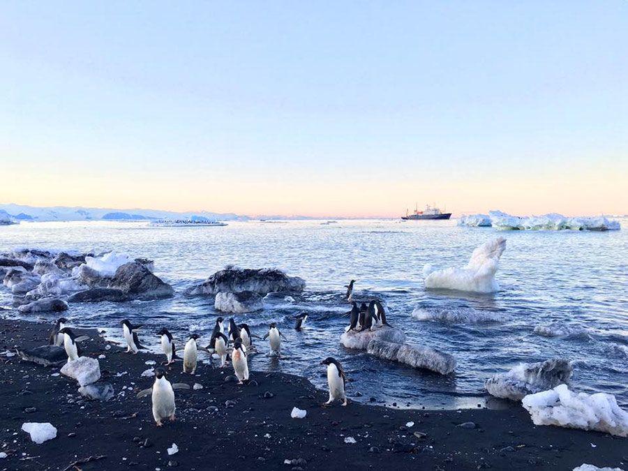 viaje antartida, expedicion antartida
