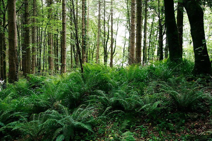 bosques de sligo, viajes irlanda