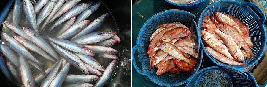 pescar en castellon, pescar en valencia