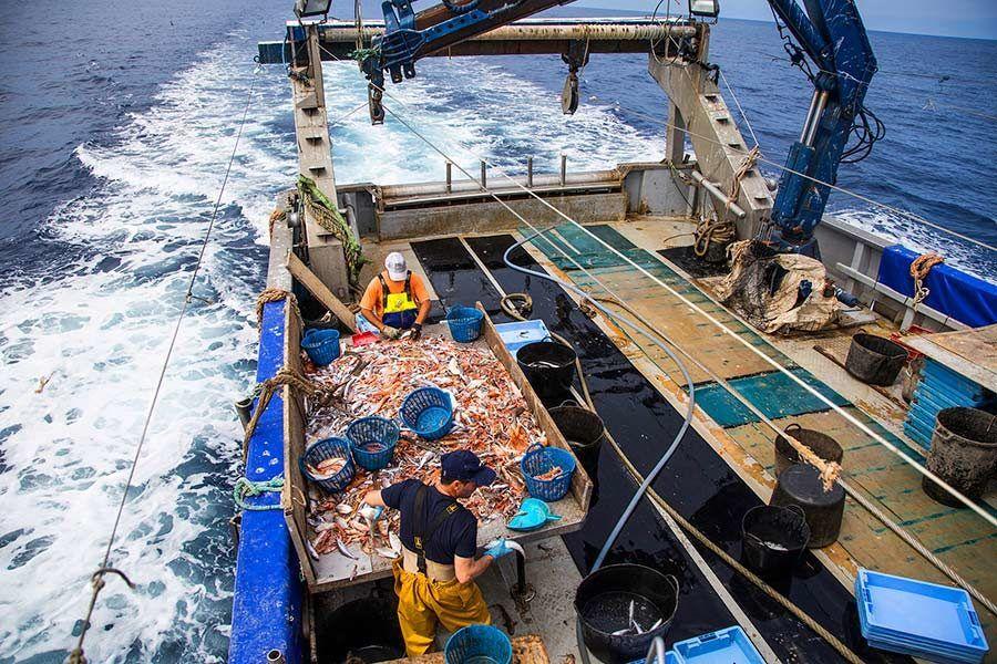pescaturismo, viajes castellon, que hacer en castellon