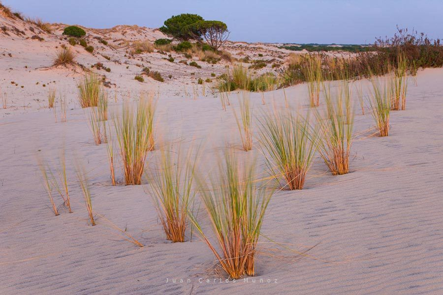 dunas, donana, playas huelva