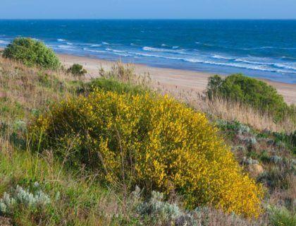playa del asperillo, playas huelva