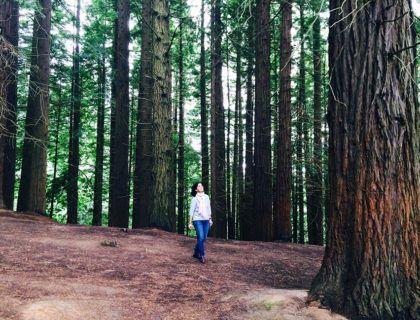 bosque de secuoyas, rutas originales de Cantabria