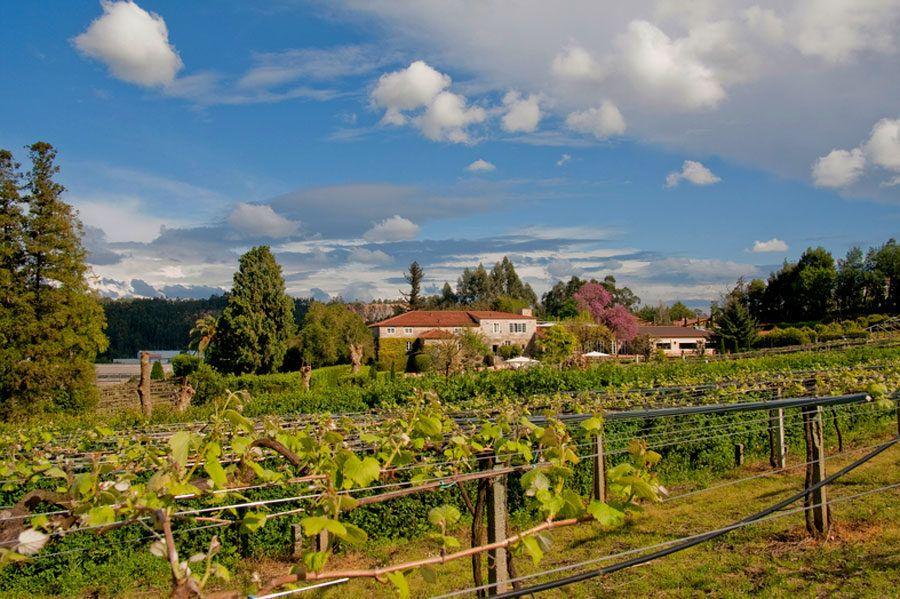 visitas a bodegas, enoturismo, rutas del vino, viajes enológicos