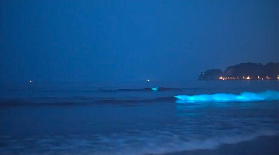 mar de ardara, luminiscencia