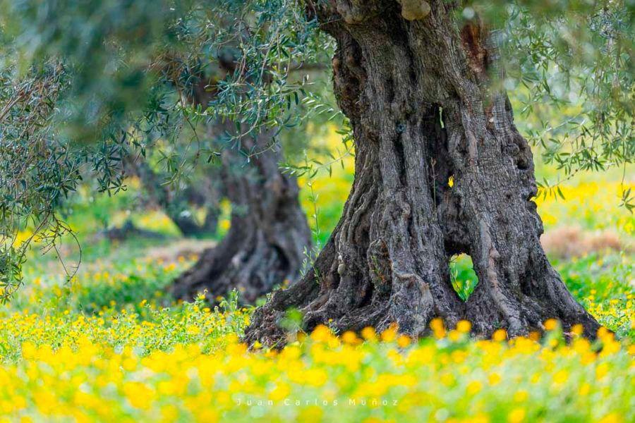 La naturaleza es la protagonista en el parque nacional de la Sierra de las Nieves en Almería.