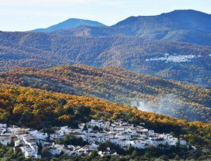 valle del genal semana de la castana