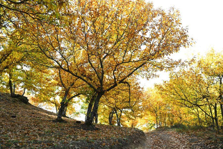 bosques de castanos de jubrique