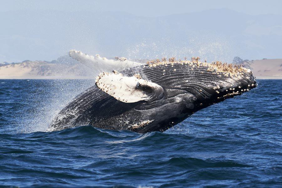 cetaceos en baja california