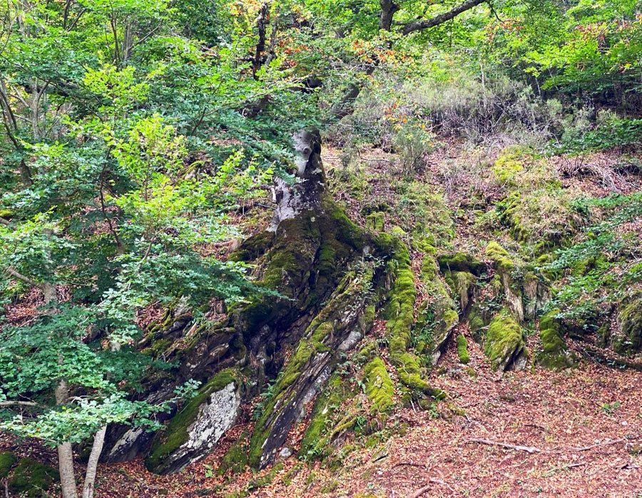 haya de la roca montejo