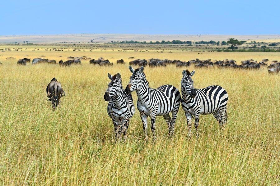 viaje de novios en Africa