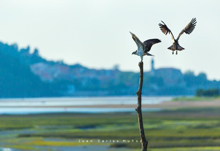 aves en bird center de urdaibai
