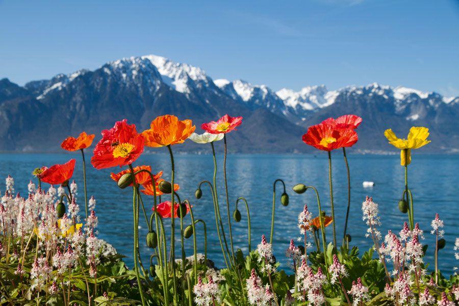 Suiza en primavera