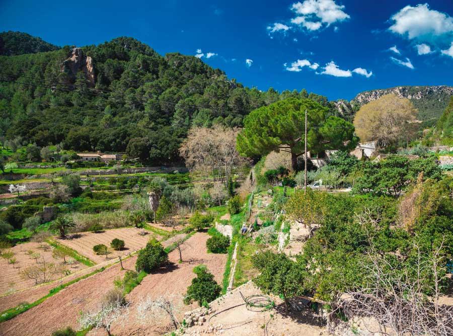 paisaje rural del interior de Mallorca