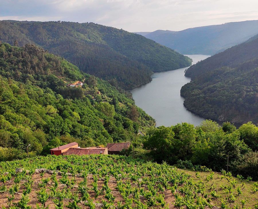 viticultura en ribeira sacra