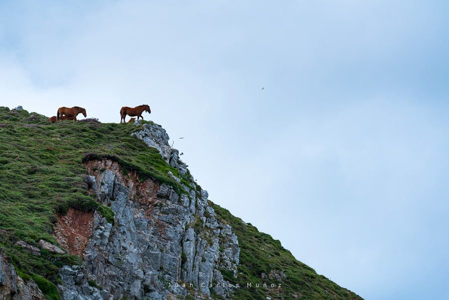 caballos en parque natural las ubinas la mesa