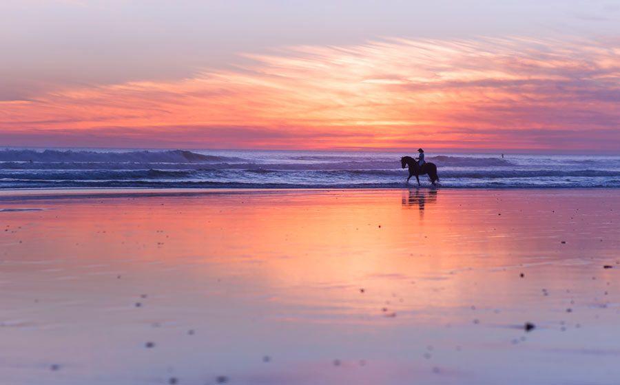 paseo caballo playa el palmar cadiz