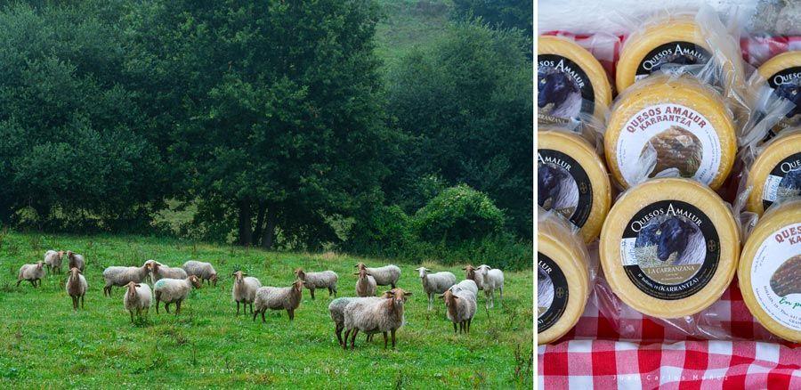 ovejas y queso amalur de vizcaya
