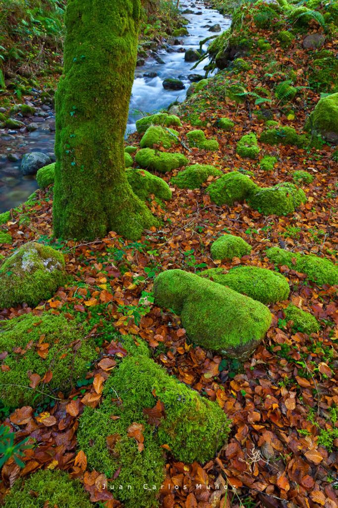 bosque de saja otono cantabria