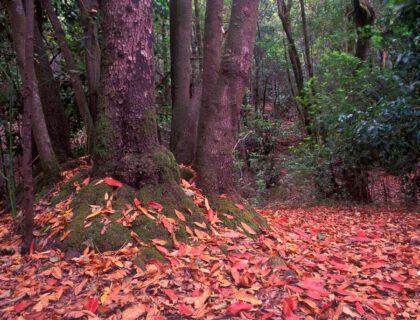 ruta bosque el cedro la gomera