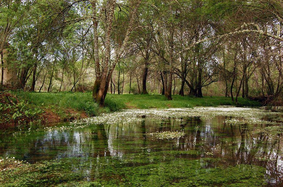 bosque ribera reserva biosfera la siberia