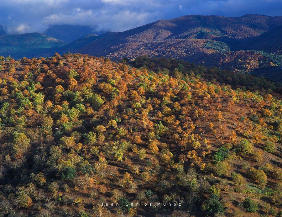 bosques castanos valle genal malaga