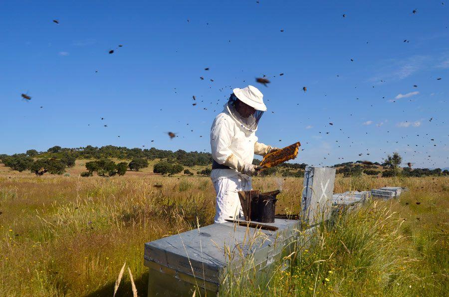 miel de la siberia extremena