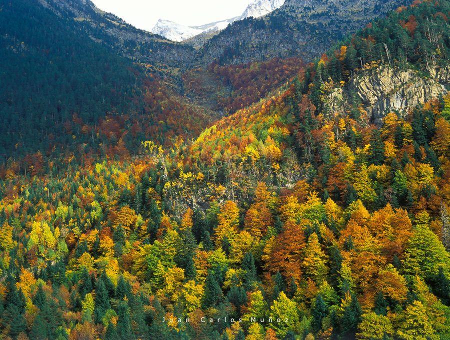 bosques en otono huesca valle otal